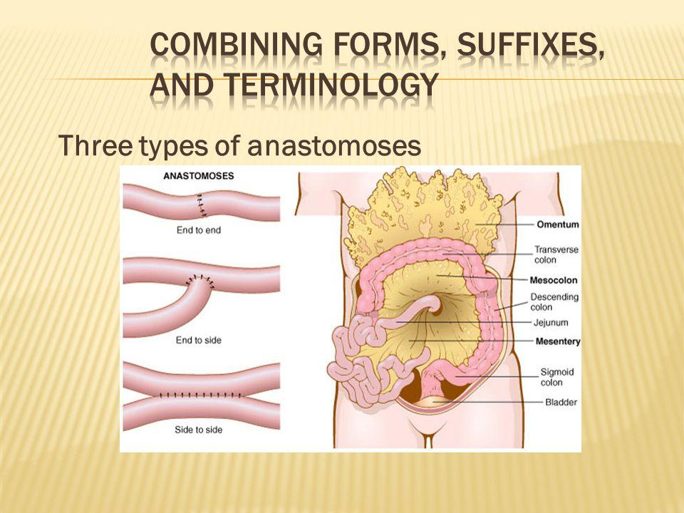 Three types of anastomoses