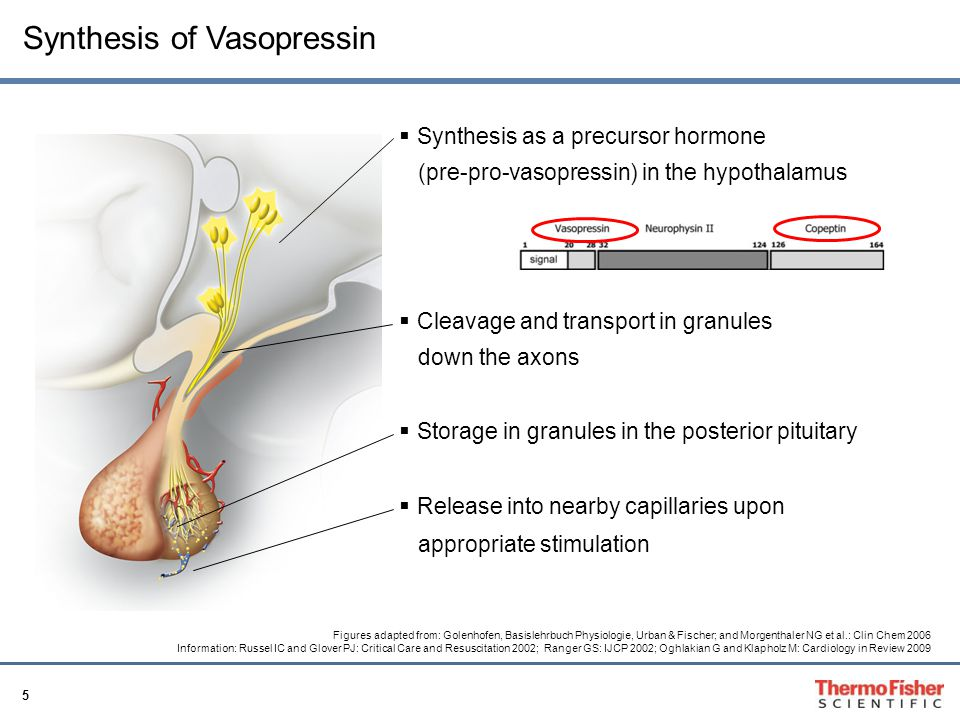 16 Quantification of Vasopressin is difficult Vasopressin Platelets Protease Receptor Only specialized labs measure AVP (time to results several days) Not a single FDA approved AVP assay on the market LIMITED CLINICAL USE Further problem: very unstable ex vivo (even frozen)