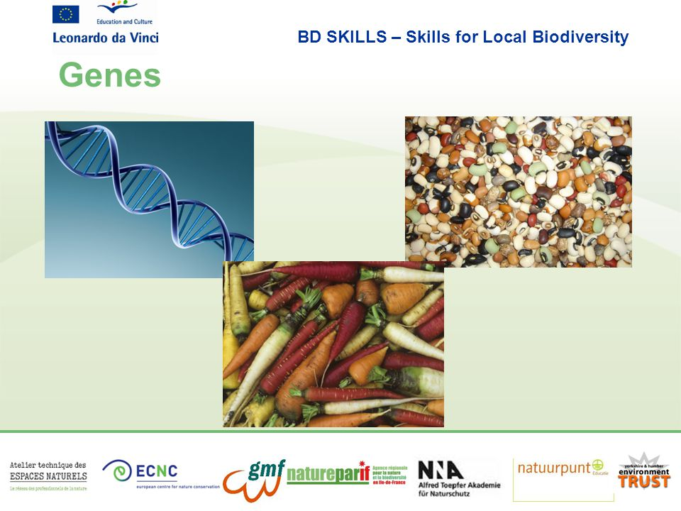 BD SKILLS – Skills for Local Biodiversity Genes
