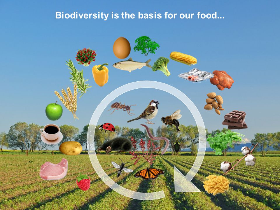 BD SKILLS – Skills for Local Biodiversity Biodiversity is the basis for our food...