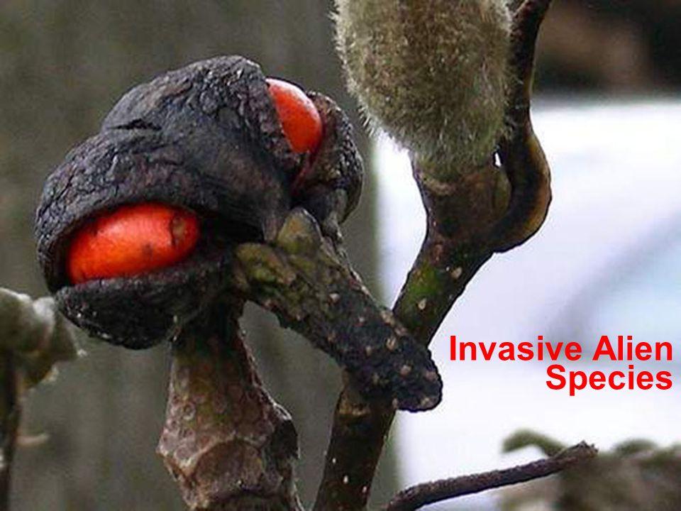 BD SKILLS – Skills for Local Biodiversity Invasive Alien Species
