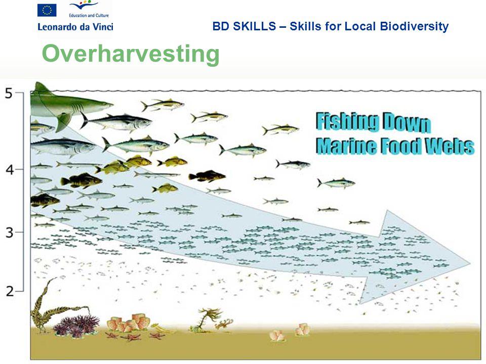 BD SKILLS – Skills for Local Biodiversity Overharvesting