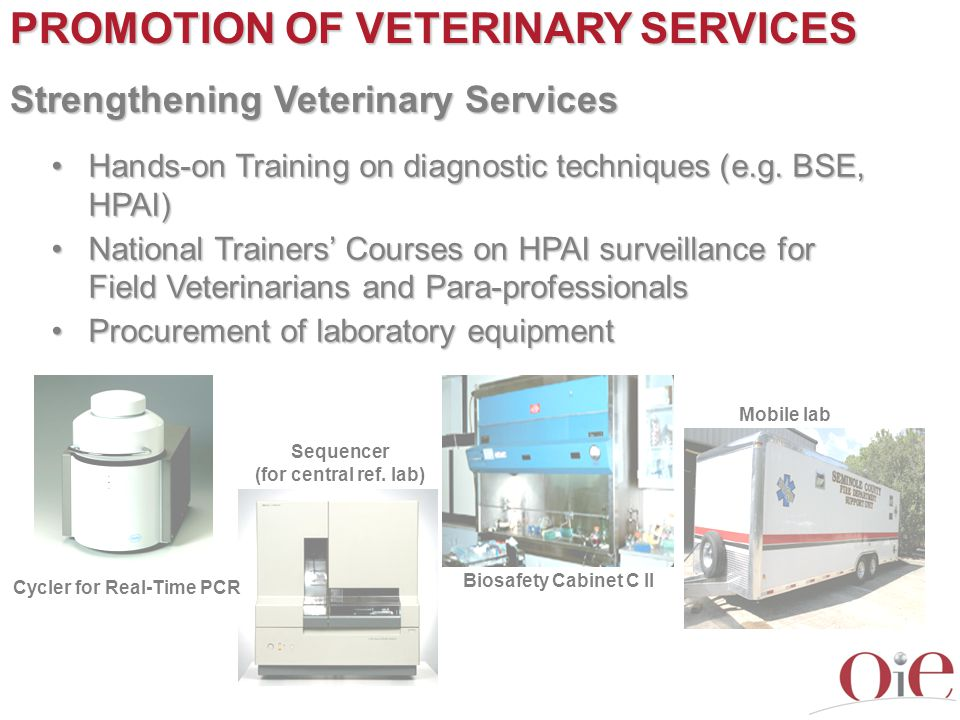 PROMOTION OF VETERINARY SERVICES Strengthening Veterinary Services Hands-on Training on diagnostic techniques (e.g. BSE, HPAI)Hands-on Training on dia