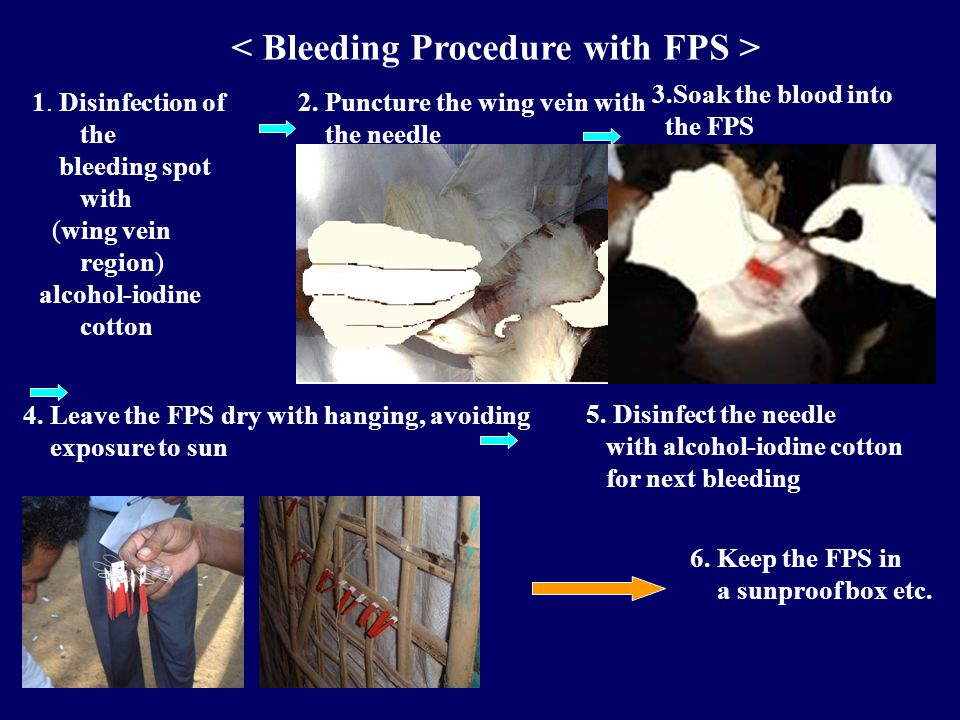 1. Disinfection of the bleeding spot with (wing vein region) alcohol-iodine cotton 2.