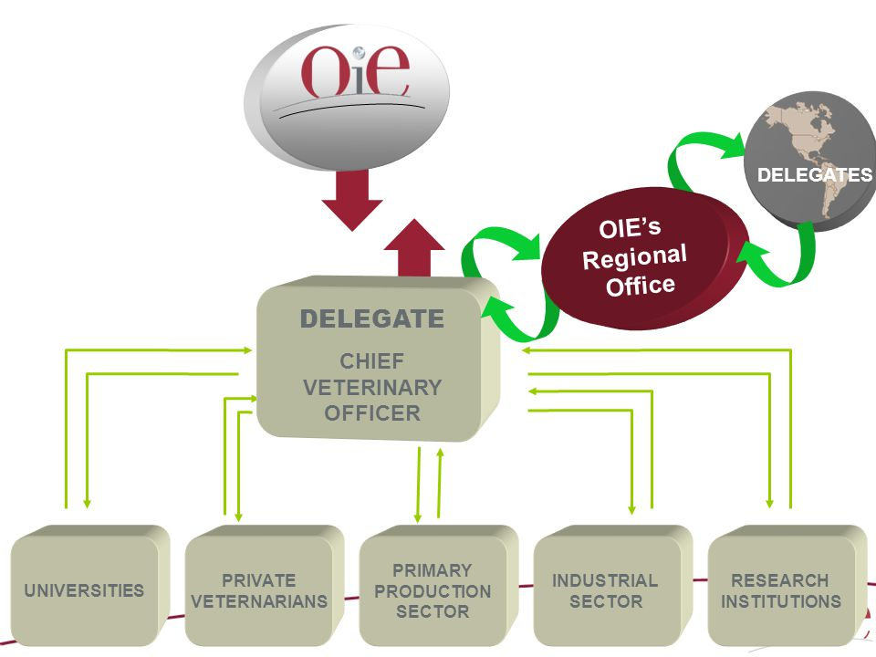 UNIVERSITIES PRIVATE VETERNARIANS PRIMARY PRODUCTION SECTOR INDUSTRIAL SECTOR RESEARCH INSTITUTIONS DELEGATE CHIEF VETERINARY OFFICER NATIONAL STRUCTURE FOR THE ANALYSIS OF OIE STANDARDS DELEGATES OIE's Regional Office