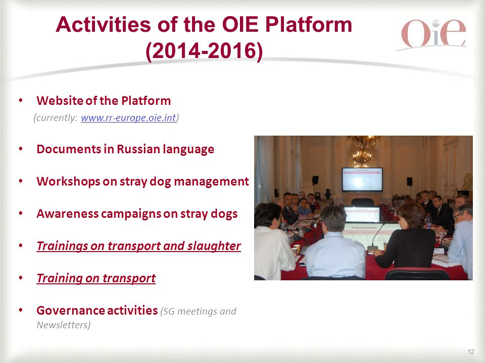 12 Activities of the OIE Platform ( ) Website of the Platform (currently:   Documents in Russian language Workshops on stray dog management Awareness campaigns on stray dogs Trainings on transport and slaughter Training on transport Governance activities (SG meetings and Newsletters)