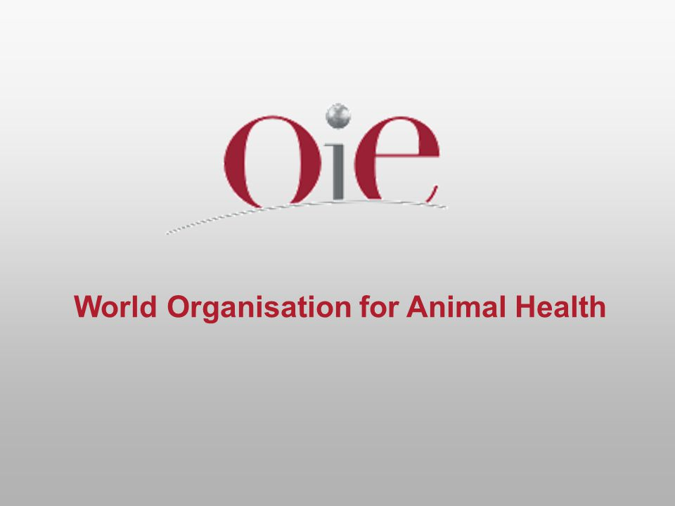 OIE specialist commissions  Terrestrial Animal Health Standards Commission – responsible for AW  Biological Standards Commission  Scientific Commission for Animal Diseases  Aquatic Animal Health Standards Commission  using working groups and ad hoc groups for specialist tasks eg animal welfare, BSE, disease surveillance, sea transport