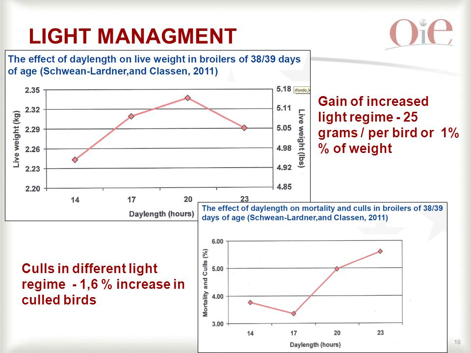 18 LIGHT MANAGMENT Gain of increased light regime - 25 grams / per bird or 1% % of weight Culls in different light regime - 1,6 % increase in culled birds