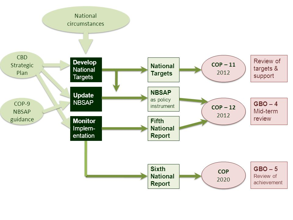 Develop National Targets National Targets Review of targets & support COP – 11 2012 COP – 11 2012 Sixth National Report GBO – 5 Review of achievement COP 2020 COP 2020 COP – 12 2012 COP – 12 2012 National circumstances CBD Strategic Plan CBD Strategic Plan GBO – 4 Mid-term review Monitor Implem- entation Fifth National Report COP-9 NBSAP guidance COP-9 NBSAP guidance Update NBSAP NBSAP as policy instrument