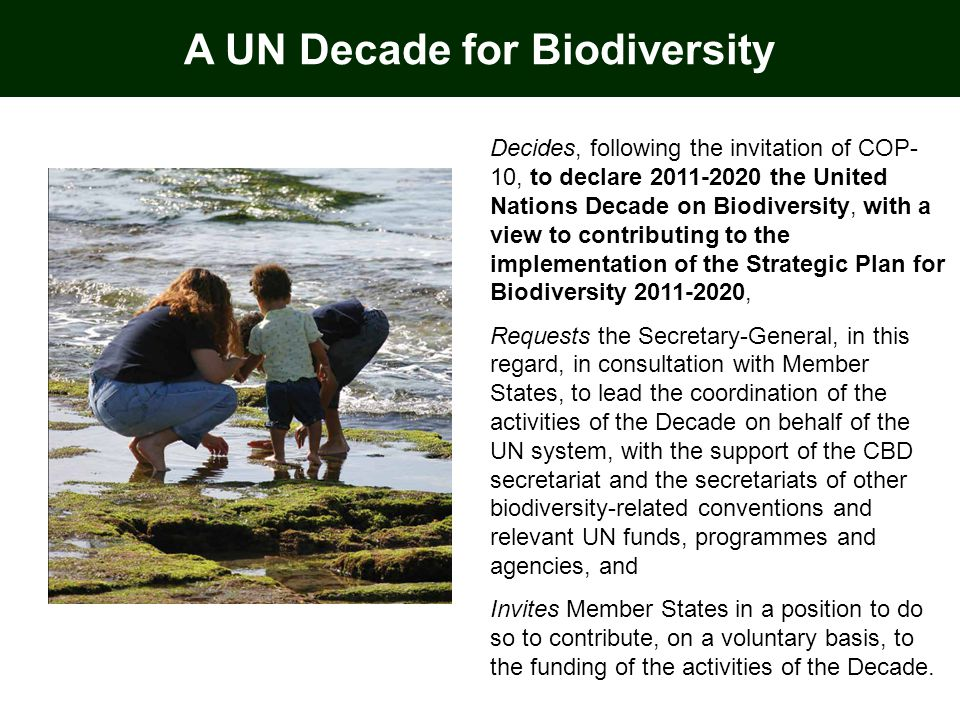 Decides, following the invitation of COP- 10, to declare 2011-2020 the United Nations Decade on Biodiversity, with a view to contributing to the implementation of the Strategic Plan for Biodiversity 2011-2020, Requests the Secretary-General, in this regard, in consultation with Member States, to lead the coordination of the activities of the Decade on behalf of the UN system, with the support of the CBD secretariat and the secretariats of other biodiversity-related conventions and relevant UN funds, programmes and agencies, and Invites Member States in a position to do so to contribute, on a voluntary basis, to the funding of the activities of the Decade.