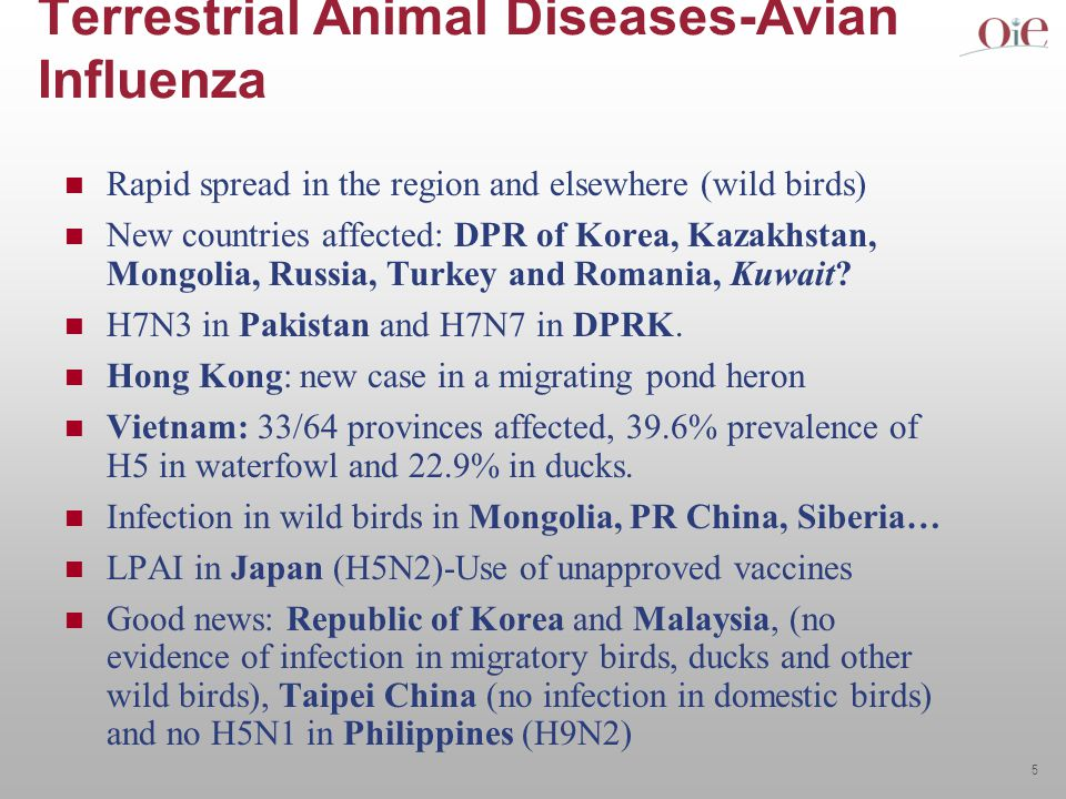 5 Terrestrial Animal Diseases-Avian Influenza Rapid spread in the region and elsewhere (wild birds) New countries affected: DPR of Korea, Kazakhstan, Mongolia, Russia, Turkey and Romania, Kuwait.