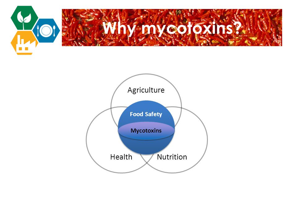 Agriculture Mycotoxins represent a core challenge within the food safety field NutritionHealth Food Safety Mycotoxins Why mycotoxins