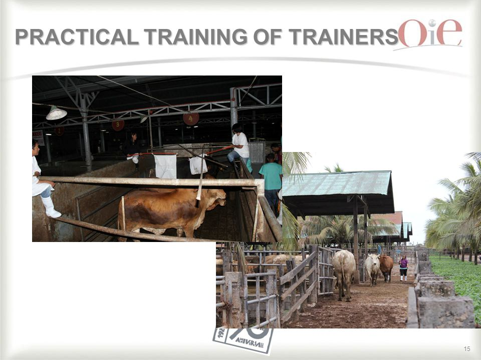 15 PRACTICAL TRAINING OF TRAINERS