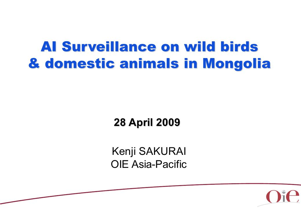 AI Surveillance on wild birds & domestic animals in Mongolia & domestic animals in Mongolia Kenji SAKURAI OIE Asia-Pacific 28 April 2009