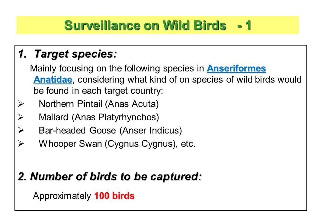 Surveillance on Wild Birds - 1 1.Target species: Anseriformes Anatidae Mainly focusing on the following species in Anseriformes Anatidae, considering what kind of on species of wild birds would be found in each target country:  Northern Pintail (Anas Acuta)  Mallard (Anas Platyrhynchos)  Bar-headed Goose (Anser Indicus)  Whooper Swan (Cygnus Cygnus), etc.