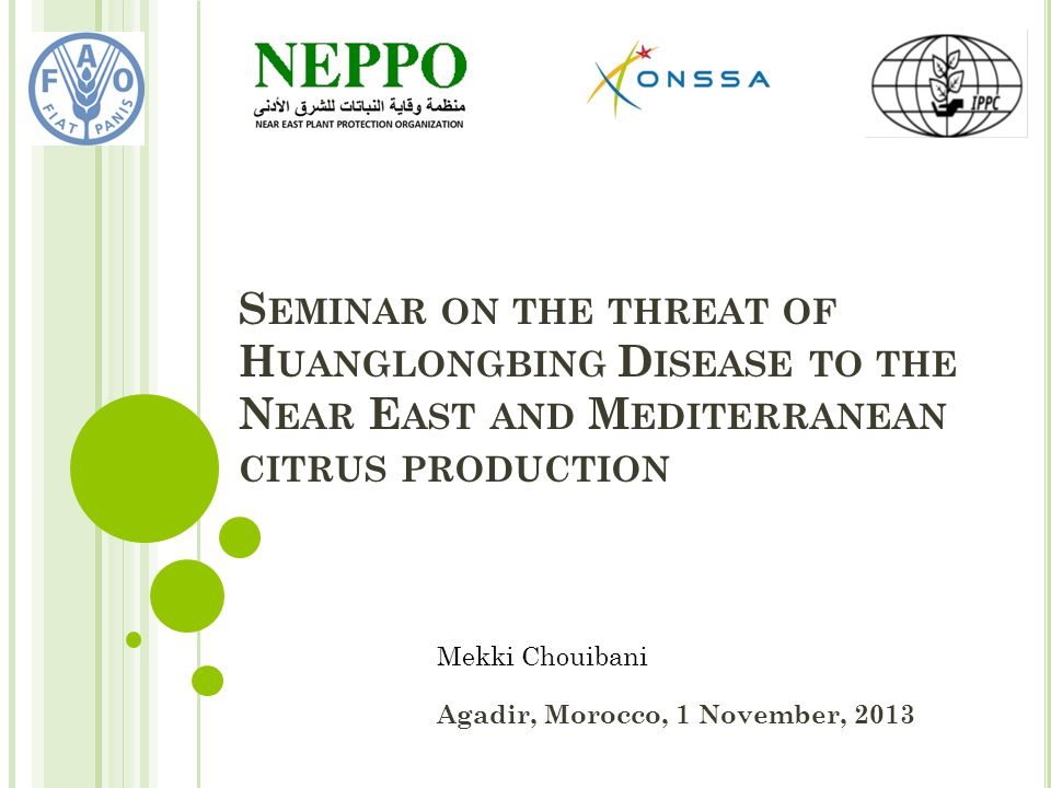 S EMINAR ON THE THREAT OF H UANGLONGBING D ISEASE TO THE N EAR E AST AND M EDITERRANEAN CITRUS PRODUCTION Agadir, Morocco, 1 November, 2013 Mekki Chouibani