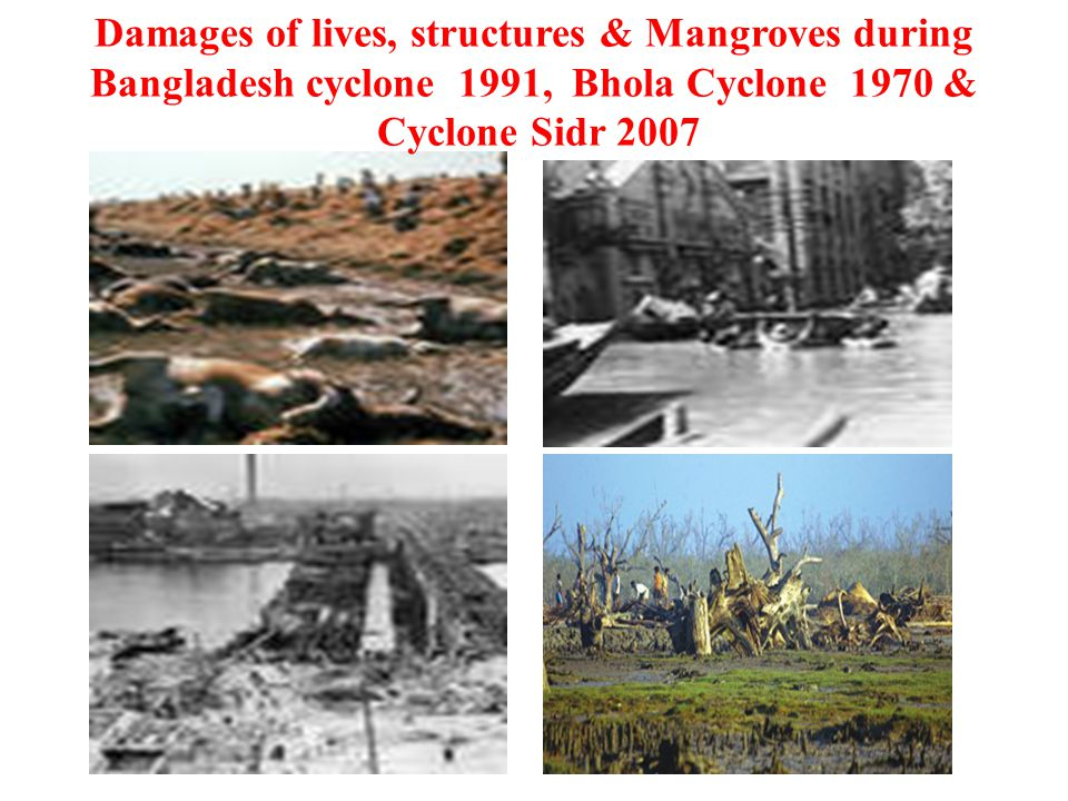 Damages of lives, structures & Mangroves during Bangladesh cyclone 1991, Bhola Cyclone 1970 & Cyclone Sidr 2007