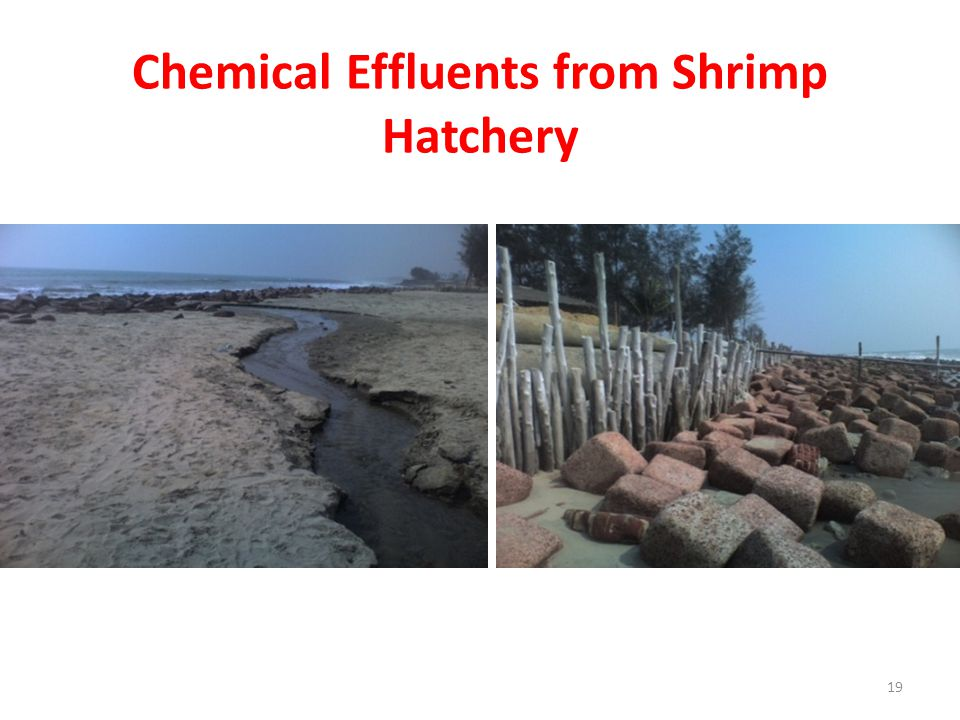 Chemical Effluents from Shrimp Hatchery 19