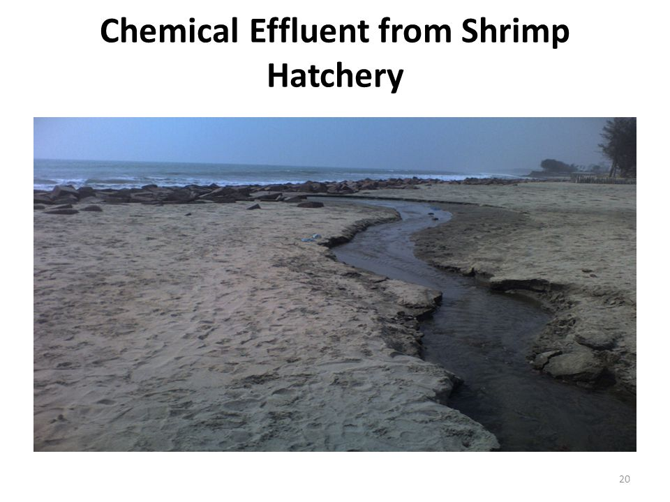 Chemical Effluent from Shrimp Hatchery 20