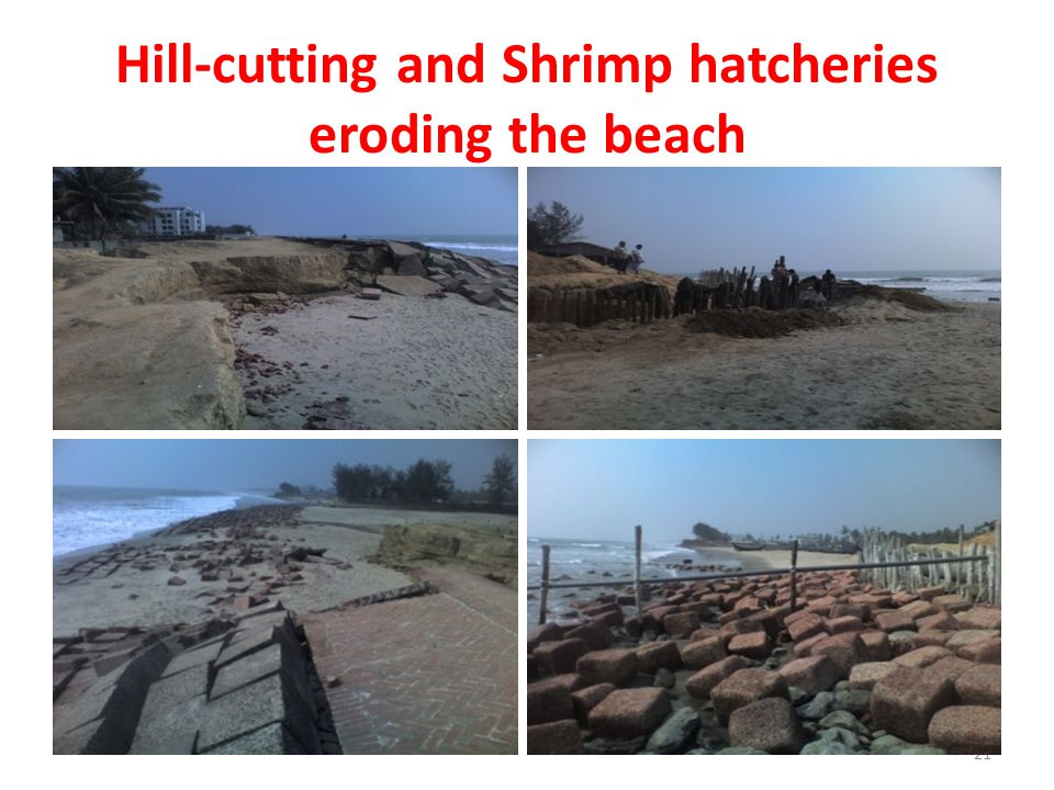 Hill-cutting and Shrimp hatcheries eroding the beach 21