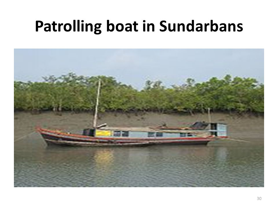 Patrolling boat in Sundarbans 30