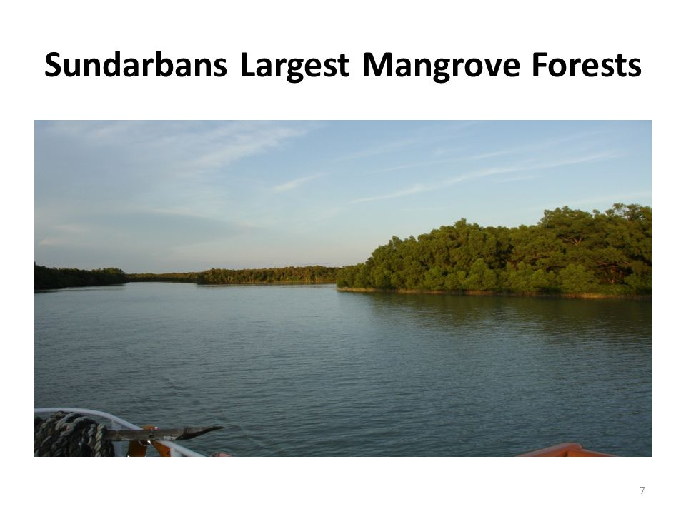 Sundarbans Largest Mangrove Forests 7