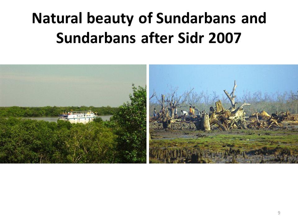 Patrolling boat in Sundarbans 30