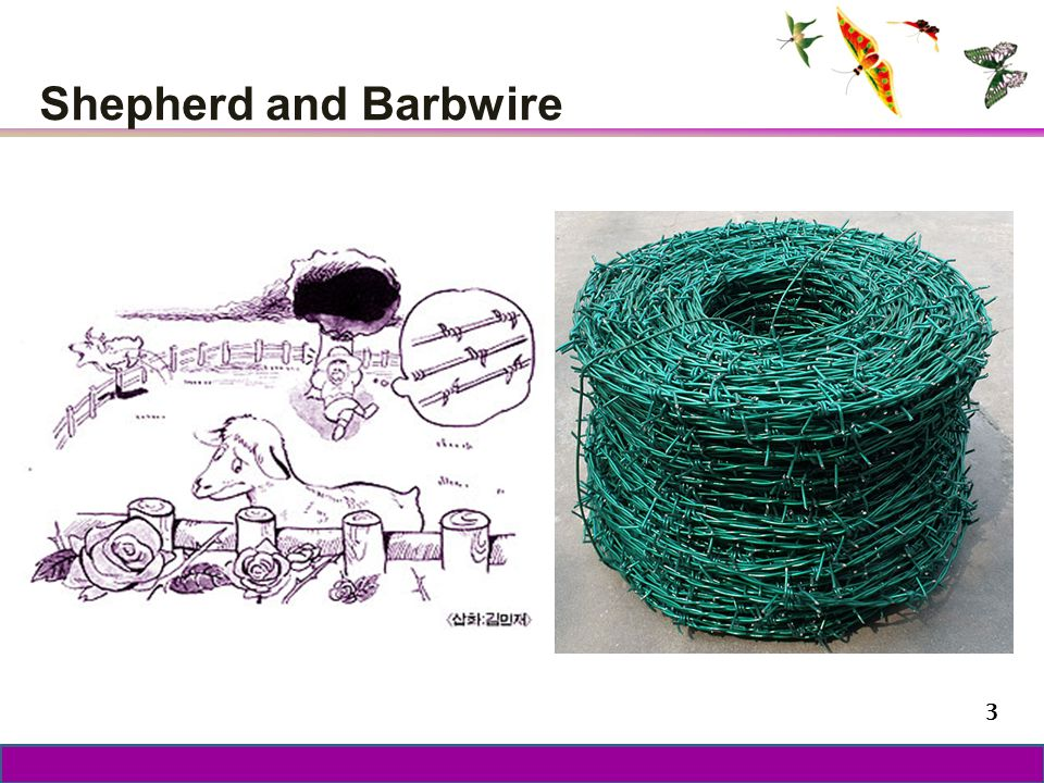 Shepherd and Barbwire 3