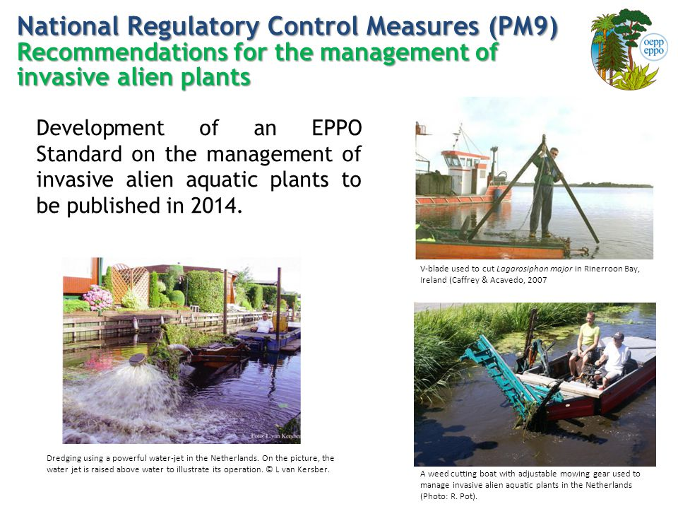 National Regulatory Control Measures (PM9) Recommendations for the management of invasive alien plants V-blade used to cut Lagarosiphon major in Rinerroon Bay, Ireland (Caffrey & Acavedo, 2007 A weed cutting boat with adjustable mowing gear used to manage invasive alien aquatic plants in the Netherlands (Photo: R.