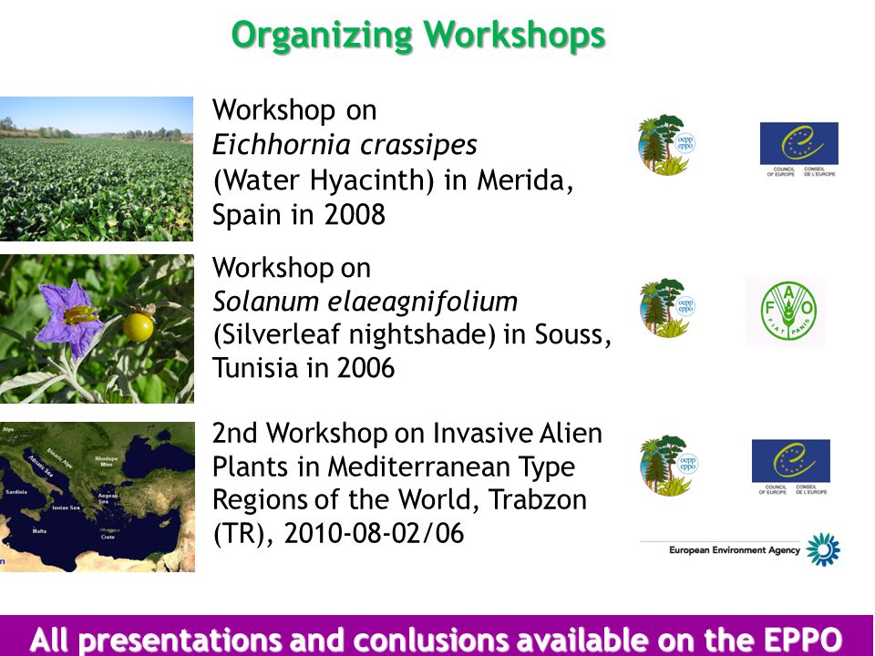 Organizing Workshops Workshop on Eichhornia crassipes (Water Hyacinth) in Merida, Spain in 2008 Workshop on Solanum elaeagnifolium (Silverleaf nightshade) in Souss, Tunisia in 2006 All presentations and conlusions available on the EPPO website 2nd Workshop on Invasive Alien Plants in Mediterranean Type Regions of the World, Trabzon (TR), 2010-08-02/06