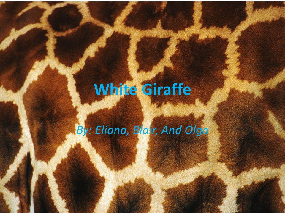 White Giraffe By: Eliana, Blair, And Olga
