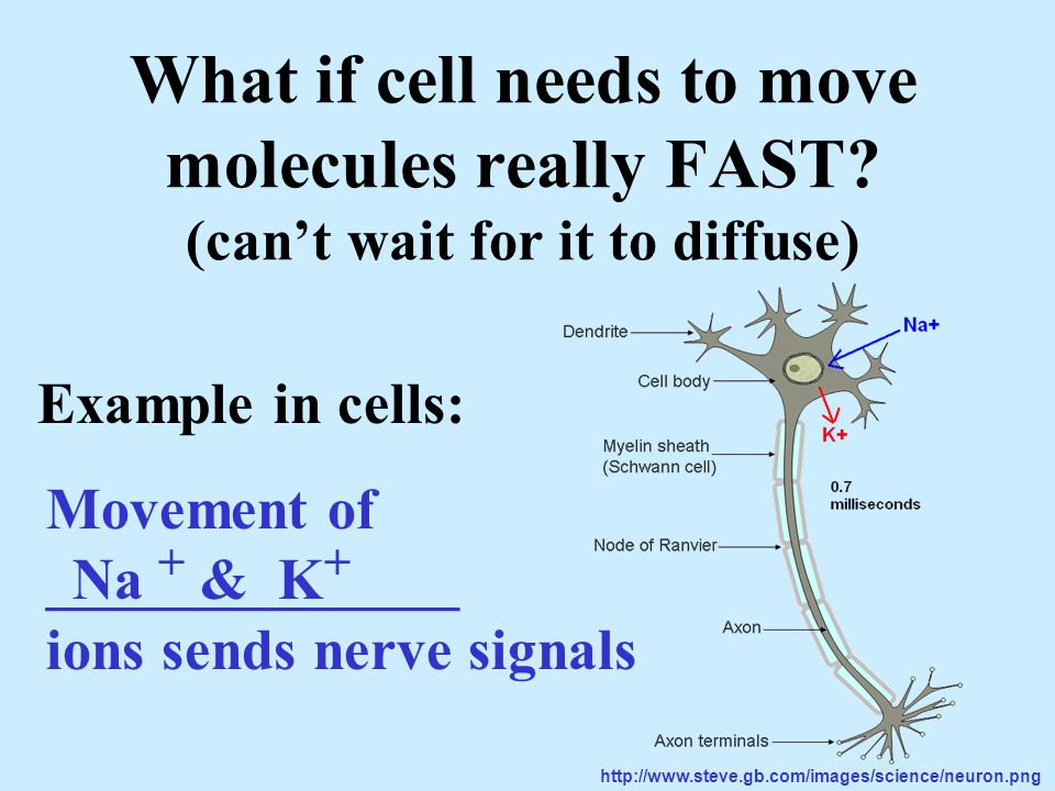 What if cell needs to move molecules really FAST.