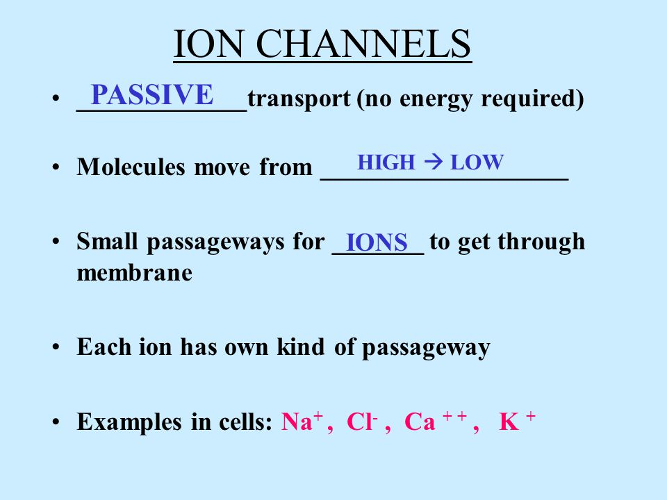 ION CHANNELS _____________transport (no energy required) Molecules move from ___________________ Small passageways for _______ to get through membrane Each ion has own kind of passageway Examples in cells: Na +, Cl -, Ca + +, K + PASSIVE HIGH  LOW IONS