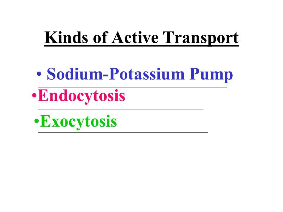 Kinds of Active Transport Sodium-Potassium Pump Endocytosis Exocytosis ________________________________________ ___________________________________ ____________________________________