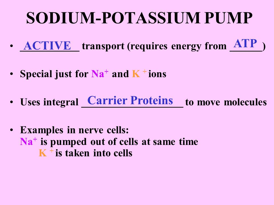 SODIUM-POTASSIUM PUMP ___________ transport (requires energy from ______) Special just for Na + and K + ions Uses integral ___________________ to move molecules Examples in nerve cells: Na + is pumped out of cells at same time K + is taken into cells ACTIVE Carrier Proteins ATP