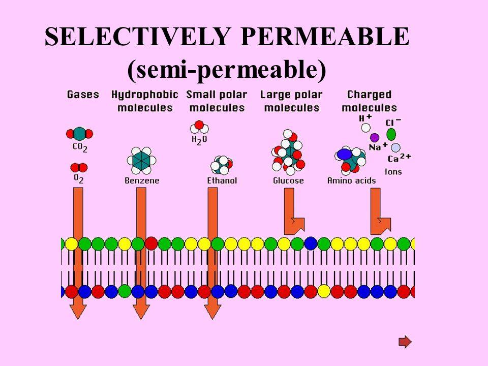 SELECTIVELY PERMEABLE (semi-permeable)