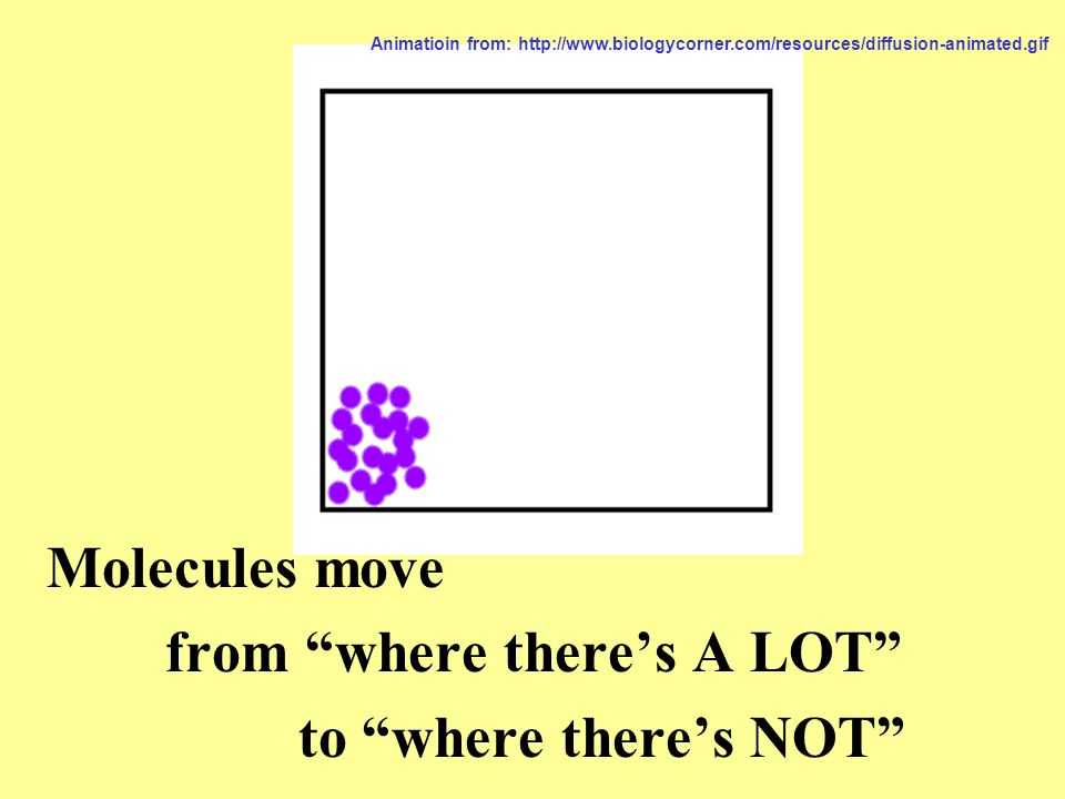 Molecules move from where there's A LOT to where there's NOT Animatioin from: http://www.biologycorner.com/resources/diffusion-animated.gif
