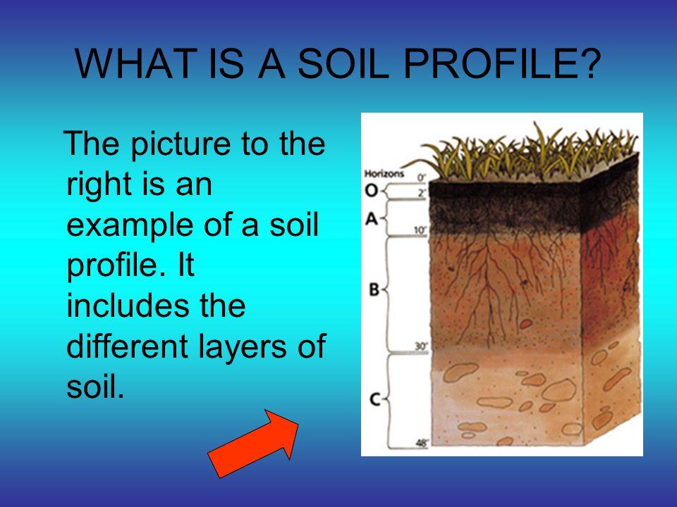 Madison will now explain our soil profile.