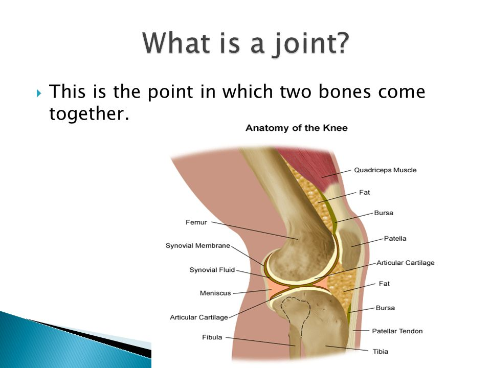  This is the point in which two bones come together.