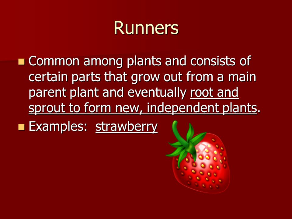 Runners Common among plants and consists of certain parts that grow out from a main parent plant and eventually root and sprout to form new, independent plants.