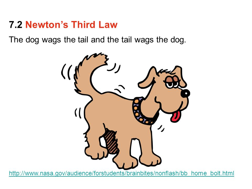 The dog wags the tail and the tail wags the dog. 7.2 Newton's Third Law http://www.nasa.gov/audience/forstudents/brainbites/nonflash/bb_home_bolt.html
