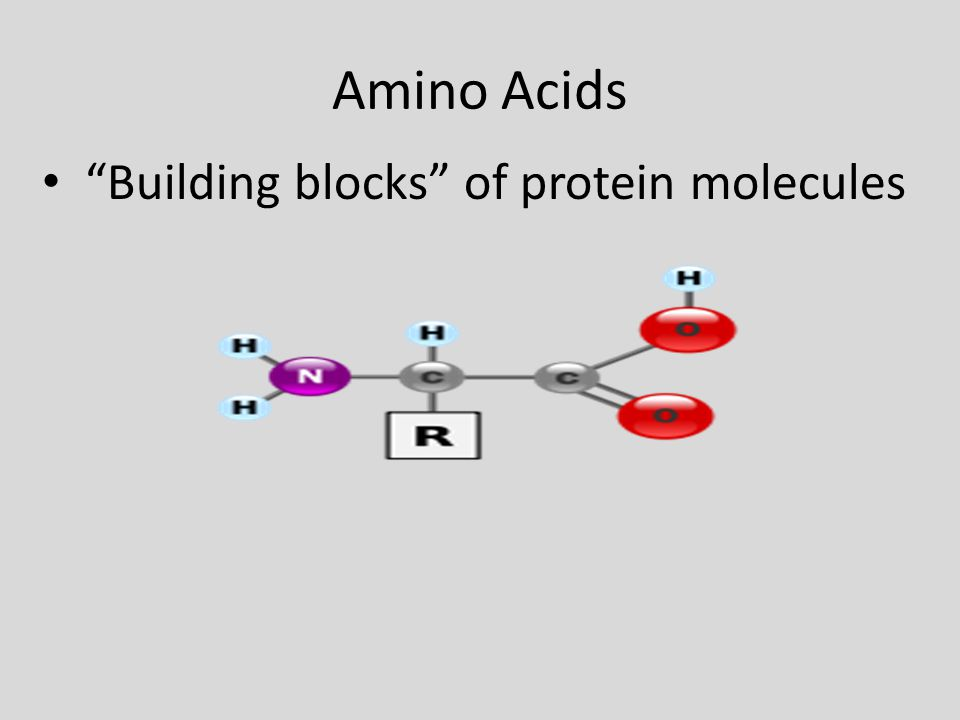 "Amino Acids ""Building blocks"" of protein molecules"