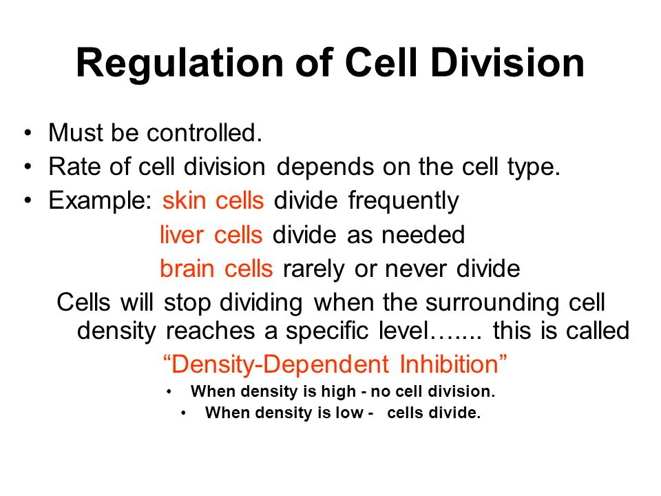 Regulation of Cell Division Must be controlled. Rate of cell division depends on the cell type. Example: skin cells divide frequently liver cells divi