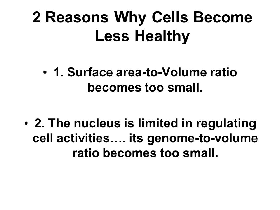 2 Reasons Why Cells Become Less Healthy 1. Surface area-to-Volume ratio becomes too small. 2. The nucleus is limited in regulating cell activities…. i