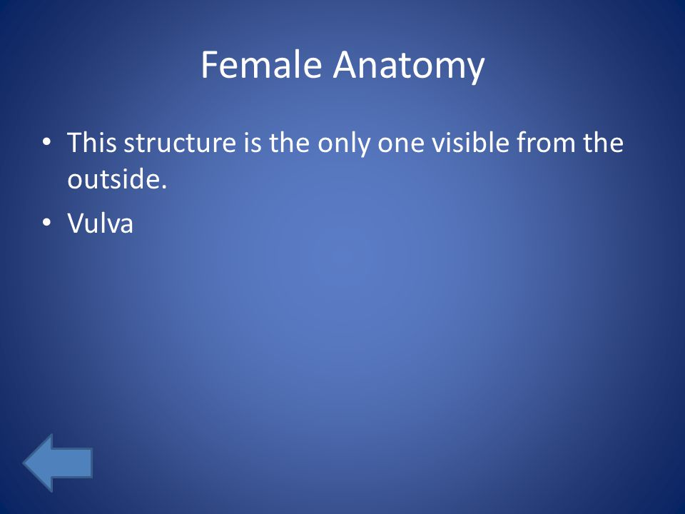 Female Anatomy This structure is the only one visible from the outside. Vulva