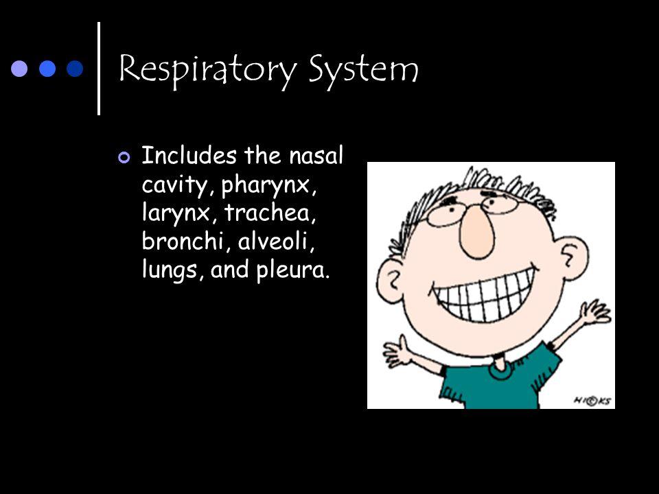 Respiratory System Includes the nasal cavity, pharynx, larynx, trachea, bronchi, alveoli, lungs, and pleura.
