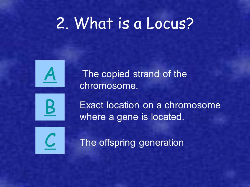 2. What is a Locus? A B C The copied strand of the chromosome. Exact location on a chromosome where a gene is located. The offspring generation