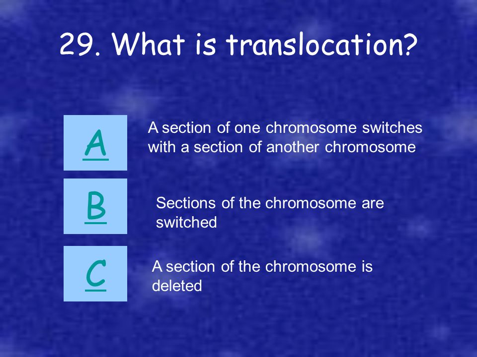 29. What is translocation? A B C A section of one chromosome switches with a section of another chromosome Sections of the chromosome are switched A s