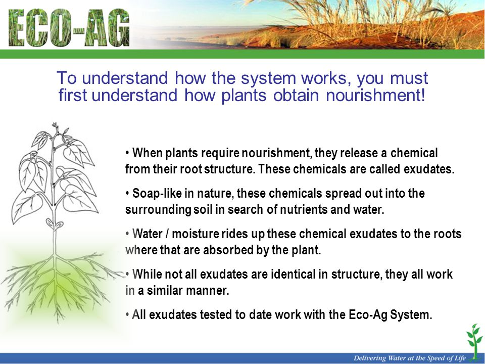 To understand how the system works, you must first understand how plants obtain nourishment! When plants require nourishment, they release a chemical