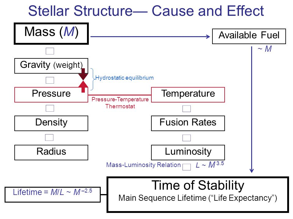 Stellar Structure— Cause and Effect → Mass (M) → Gravity (weight) → Pressure → Density Radius Temperature → Fusion Rates → → Luminosity Available Fuel